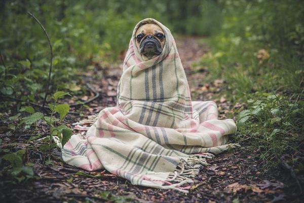 legowisko dla psa na zamówienie